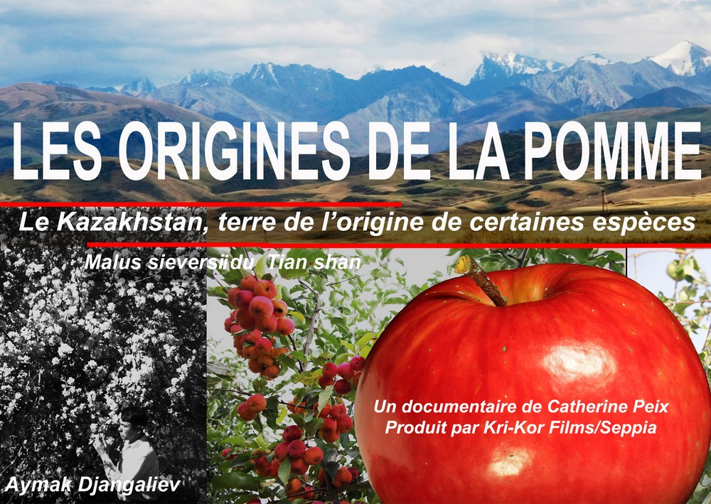 origine de la pomme