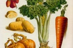 celeri-carotte