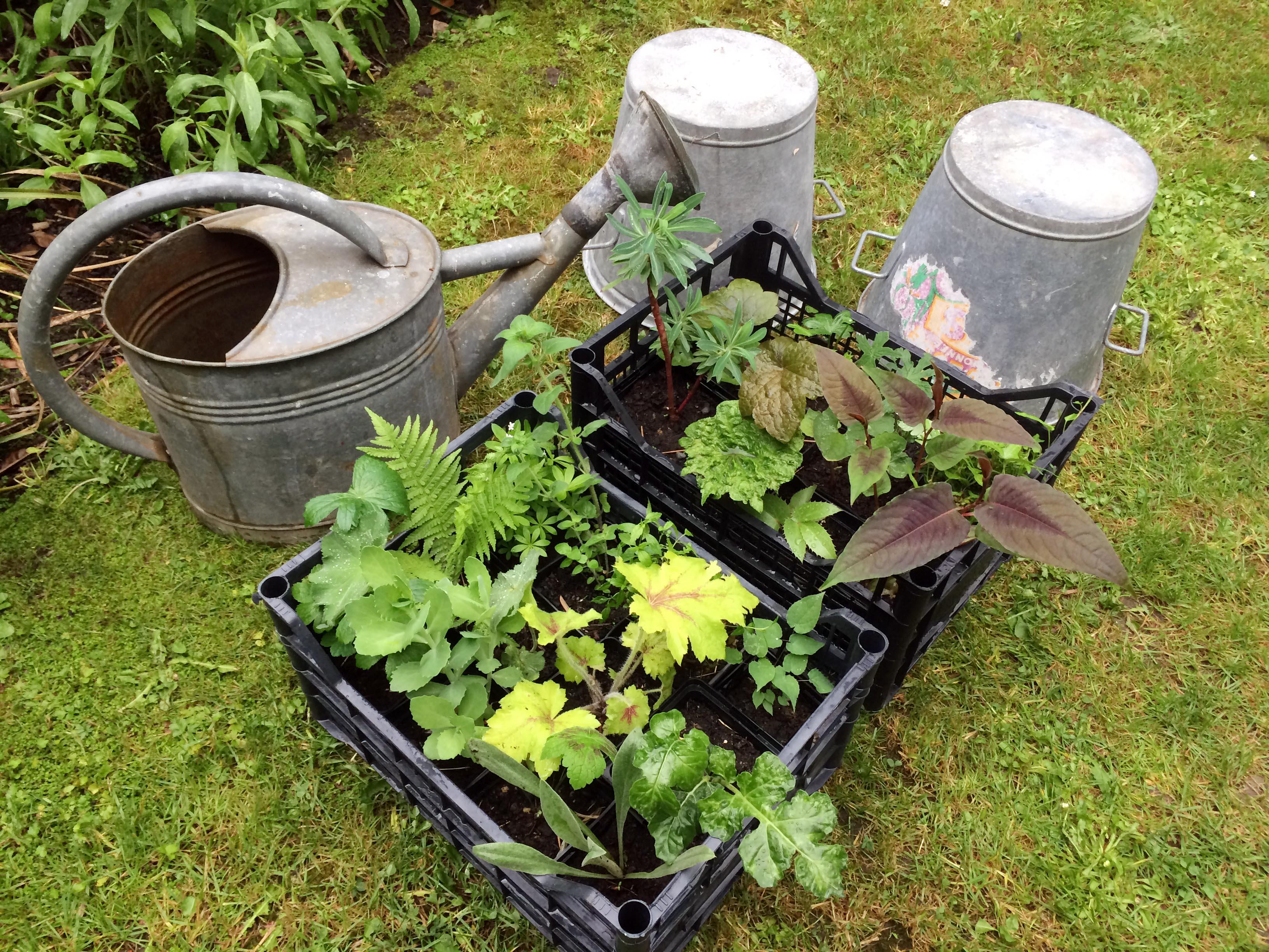 Végétaux et accessoires