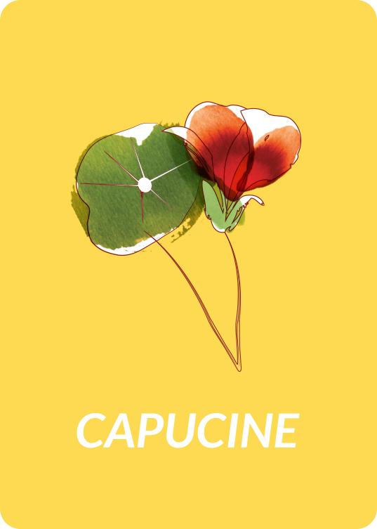 pictocapucine